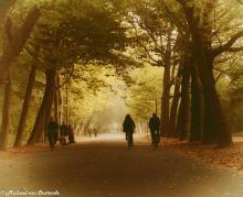 fog-Vondelpark
